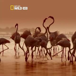 Wild Sri Lanka: Coast of Giants